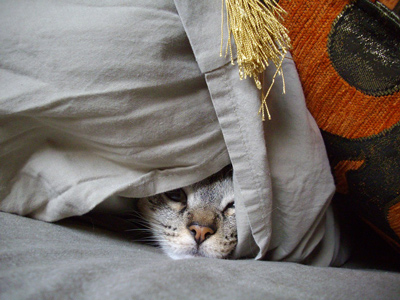 Cat hiding under sheets